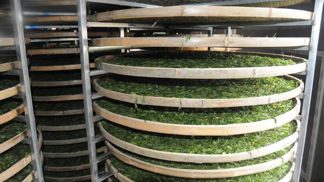 绿茶加工专用蒸汽发生器
